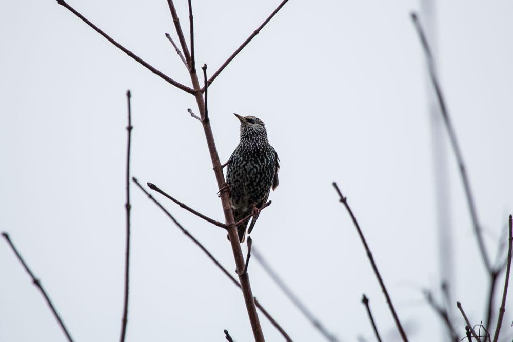 bird-img_2674